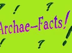 Archae-facts