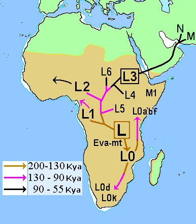 Mitochondrial DNA has been used to chart homo sapiens movement 'out' of Africa. Image Source: Wikimedia Commons