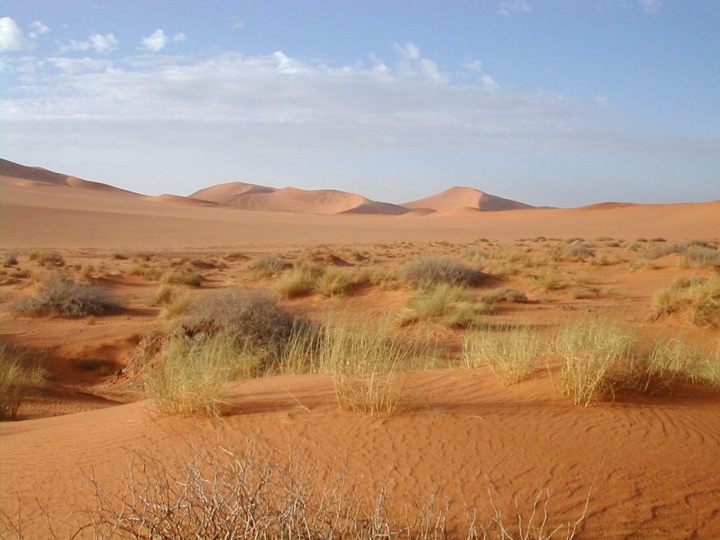 Today, moisture is famously scarce in the Sahara but ancient river systems may have enable migration long ago. Image Source: Wikimedia Commons