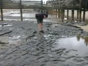 850,000-year-old human footprints found in Norfolk