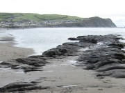 Prehistoric forest arises in Cardigan Bay after storms strip away sand