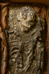 Upper Body and Skull. Image Courtesy of University of Pennsylvania.