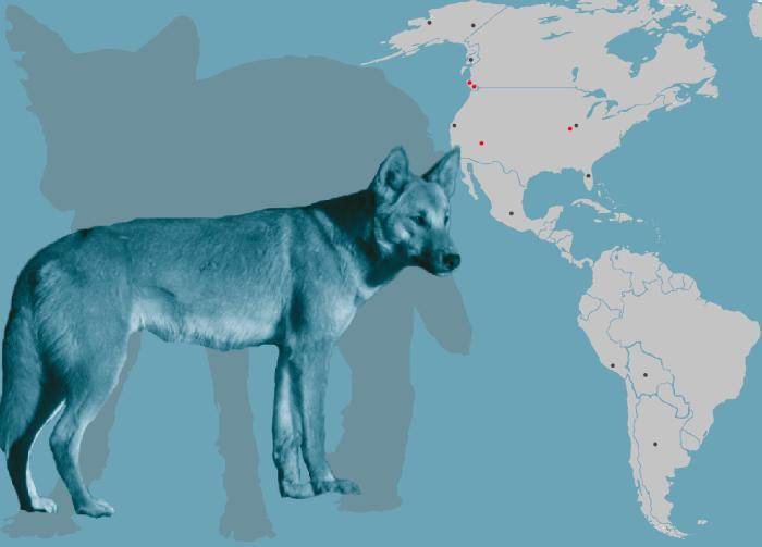 A study analyzed DNA from ancient dog remains found in more than a dozen sites in North and South America.  Credit: Angus McNab, Julie McMahon