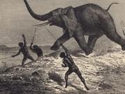 'Inhabitants of Madrid' ate elephants' meat and bone marrow 80,000 years ago