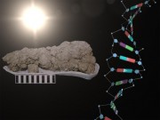 Feces fossils yield new insights into ancient diets and 'thrifty genes'
