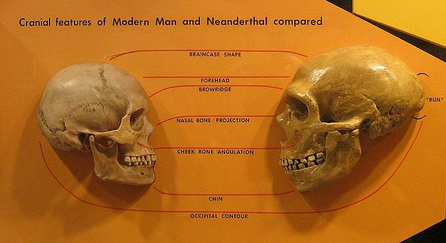 """""""We are challenging the orthodoxy that all modern human burials were necessarily more sophisticated than those of Neanderthals."""" Image Source: Wikimedia Commons"""