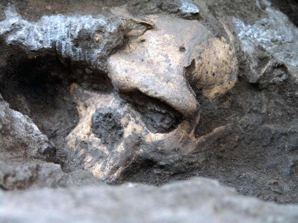 Dmanisi early «Homo» cranium in situ; Picture: Georgian National Museum