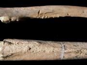 Discovery of partial skeleton suggests ruggedly built, tree-climbing human ancestor