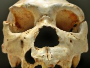 Discovery of oldest human DNA in Spanish cave sheds light on evolution