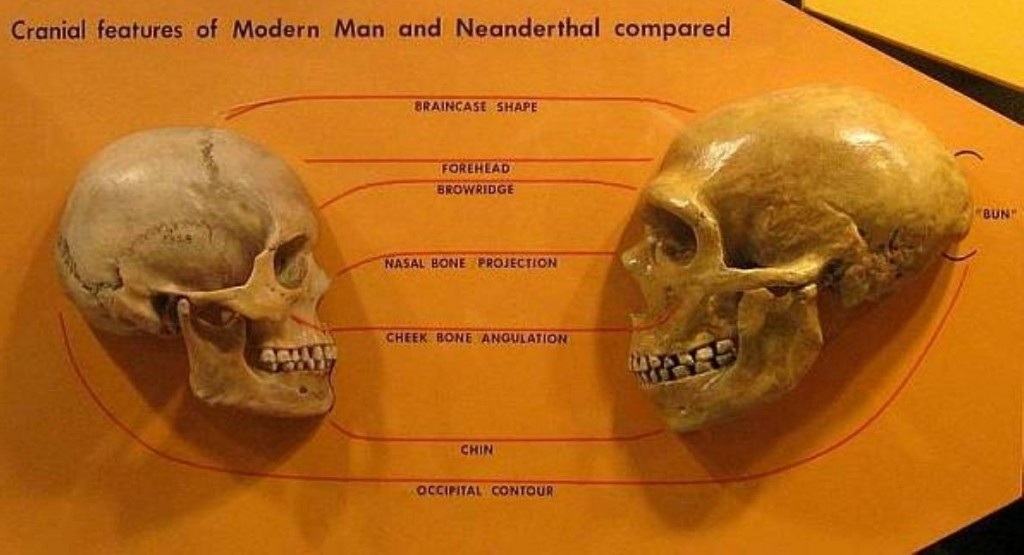 Neanderthals and Homo Sapiens compare more favourably that most think. Image Source: Wiki Media Commons.