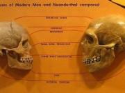 Neanderthals were not less intelligent than modern humans, scientists find