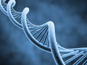 Scientists have long used DNA data to develop molecular clocks that measure the rate at which DNA changes. Image Source: Private Collection