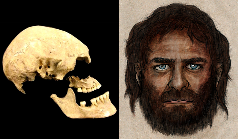 Left:The Stuttgart skull, from a 7,000-year-old skeleton found in Germany among artifacts from the first widespread farming culture of central Europe. Right: Blue eyes and dark skin, that's how the European hunter-gatherer appeared 7,000 years ago. Artist depiction based on La Braña 1, whose remains were recovered at La Braña-Arintero site in León, Spain. Courtesy of the Consejo Superior de Investigaciones Cientificas